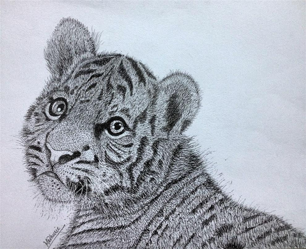 Sketches (Pencil, Graphite and Charcoal) - The Cub by Madhurie